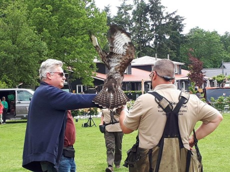 Roofvogelshow - 2019 (3).jpg