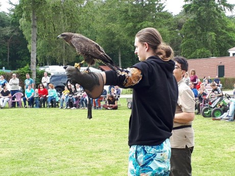 Roofvogelshow - 2019 (1).jpg