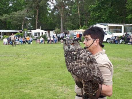 Roofvogelshow - 2019 (8).jpg